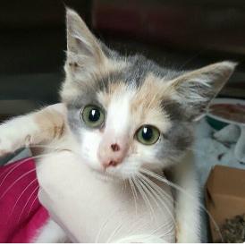 1-kitten-nose