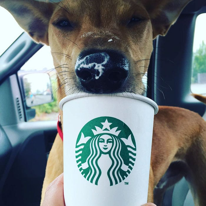 shelter-takes-dogs-puppuccinos-starbucks-7